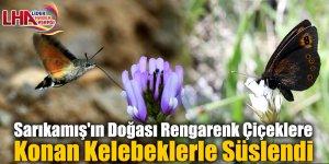 Sarıkamış'ın Doğası Rengarenk Çiçeklere Konan Kelebeklerle Süslendi