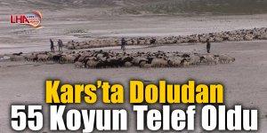 Kars'ta Doludan 55 Koyun Telef Oldu