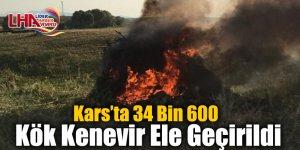 Kars'ta 34 Bin 600 Kök Kenevir Ele Geçirildi