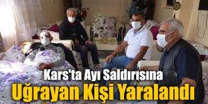 Kars'ta Ayı Saldırısına Uğrayan Kişi Yaralandı