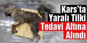 Kars'ta Yaralı Tilki Tedavi Altına Alındı