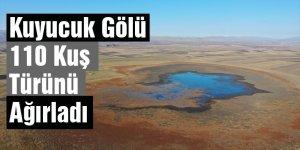 Kuyucuk Gölü 110 Kuş Türünü Ağırladı
