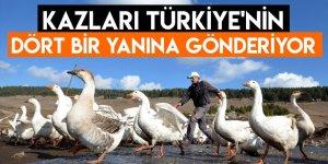 Kazları Türkiye'nin Dört Bir Yanına Gönderiyor