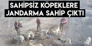 Sahipsiz Köpeklere Jandarma Sahip Çıktı