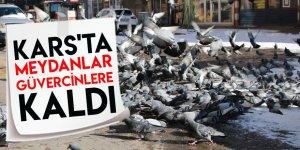 Kars'ta Meydanlar Güvercinlere Kaldı