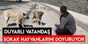 Duyarlı Vatandaş Sokak Hayvanlarını Doyuruyor