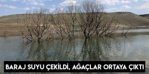 Baraj Suyu Çekildi, Ağaçlar Ortaya Çıktı