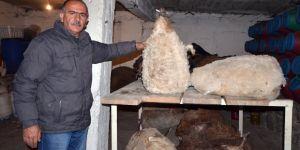 Kars tulum peyniri Kars kaşarına rakip oldu