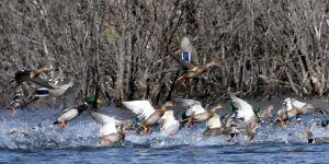 Ördek Gölü sonbaharda göz kamaştırıyor
