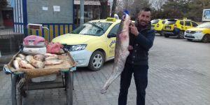 Kağızman'da 1 metre boyunda yayın balığı yakalandı
