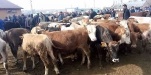 Kars'ta Hayvan Pazarı Kapatıldı