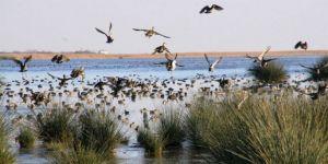 """Kuş cennetinin """"yazlıkçıları"""" dönüyor"""