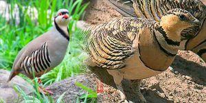 Kars'ta kuş kaçakçıları yakayı ele verdi