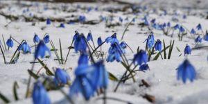 Kars'ta Mavi kardelenler büyüledi