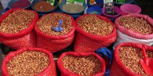 Kars'ta bostan tohumları piyasaya çıktı