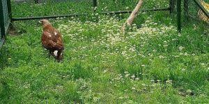 Tedavisi tamamlanan kara akbaba özgürlüğe kanat çırptı